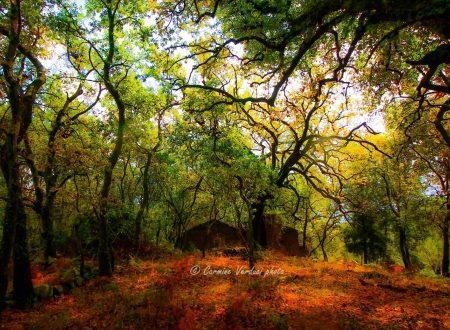 Ferruzzano (RC); Il bosco di Rùdina, un patrimonio da preservare e tutelare.